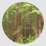 Redwood Trees at Muir Woods National Monument Classic Round Sticker