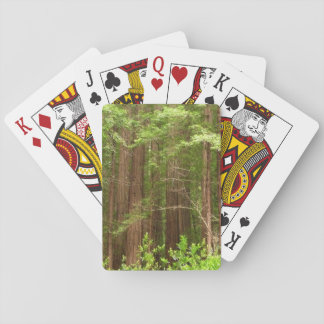 Redwood Trees at Muir Woods National Monument Deck Of Cards