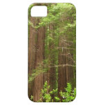 Redwood Trees at Muir Woods National Monument iPhone SE/5/5s Case