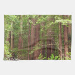 Redwood Trees at Muir Woods National Monument Hand Towels