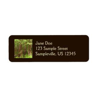 Redwood Trees at Muir Woods National Monument Label