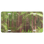Redwood Trees at Muir Woods National Monument License Plate