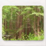 Redwood Trees at Muir Woods National Monument Mouse Pad