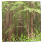 Redwood Trees at Muir Woods National Monument Napkin
