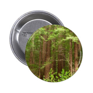 Redwood Trees at Muir Woods National Monument Pinback Button