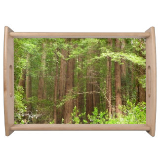 Redwood Trees at Muir Woods National Monument Service Tray