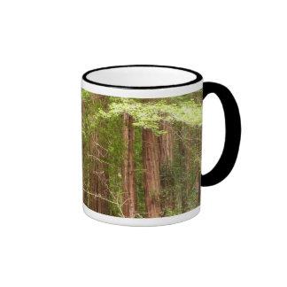 Redwood Trees at Muir Woods National Monument Ringer Mug