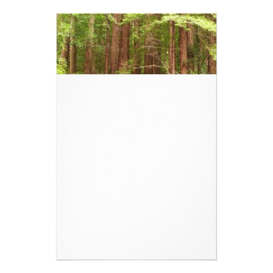 Redwood Trees at Muir Woods National Monument Stationery