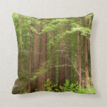 Redwood Trees at Muir Woods National Monument Throw Pillow