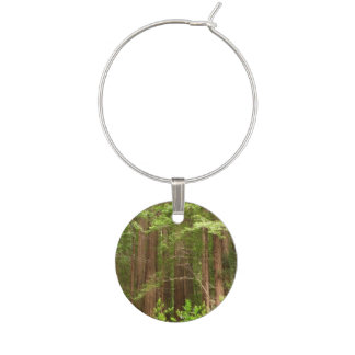 Redwood Trees at Muir Woods National Monument Wine Charm