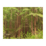 Redwood Trees at Muir Woods National Monument Wood Wall Decor