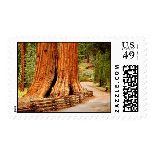 Redwood trees at Yosemite Postage