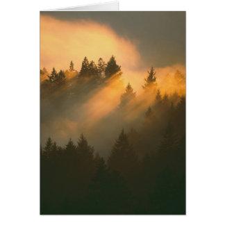 Redwood trees in coastal fog, Marin County, Greeting Card