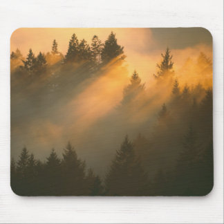 Redwood trees in coastal fog, Marin County, Mouse Pad