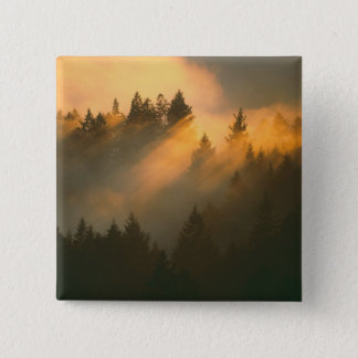 Redwood trees in coastal fog, Marin County, Pinback Button