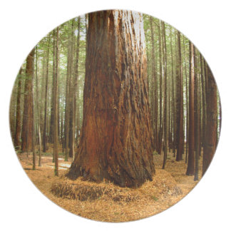 Redwood Trees Plate