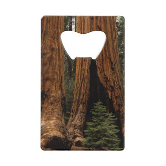 Redwood Trees, Sequoia National Park. Credit Card Bottle Opener