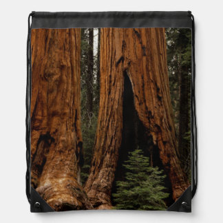 Redwood Trees, Sequoia National Park. Drawstring Backpack