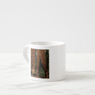 Redwood Trees, Sequoia National Park. Espresso Cup