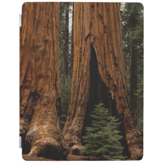 Redwood Trees, Sequoia National Park. iPad Smart Cover