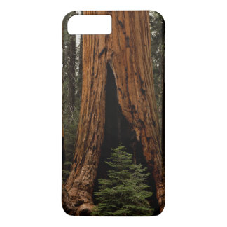 Redwood Trees, Sequoia National Park. iPhone 7 Plus Case