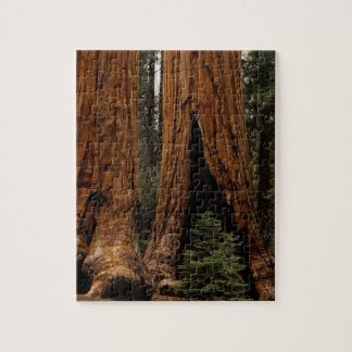 Redwood Trees, Sequoia National Park. Jigsaw Puzzle