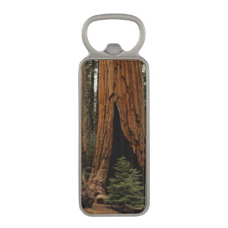 Redwood Trees, Sequoia National Park. Magnetic Bottle Opener