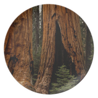 Redwood Trees, Sequoia National Park. Melamine Plate