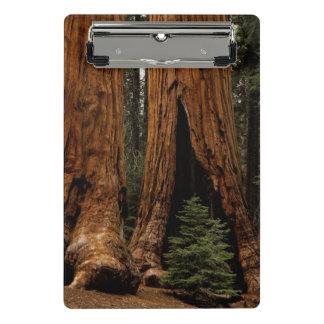 Redwood Trees, Sequoia National Park Mini Clipboard
