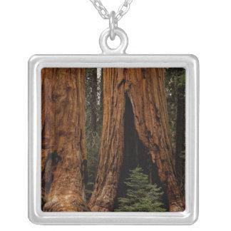 Redwood Trees, Sequoia National Park. Square Pendant Necklace