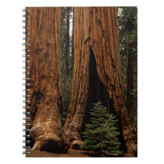 Redwood Trees, Sequoia National Park. Notebook