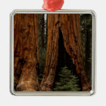 Redwood Trees, Sequoia National Park. Ornaments