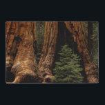 "Redwood Trees, Sequoia National Park. Placemat<br><div class=""desc"">COPYRIGHT Jerry Ginsberg / DanitaDelimont.com | US05 JGI0036.jpg | Redwood Trees,  Sequoia National Park.</div>"