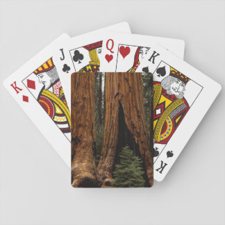 Redwood Trees, Sequoia National Park. Playing Cards