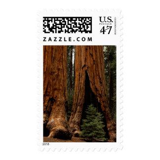 Redwood Trees, Sequoia National Park. Postage