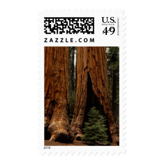 Redwood Trees, Sequoia National Park. Stamps