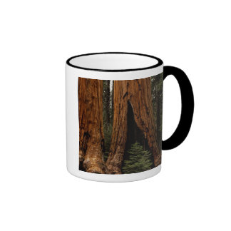 Redwood Trees, Sequoia National Park. Ringer Mug