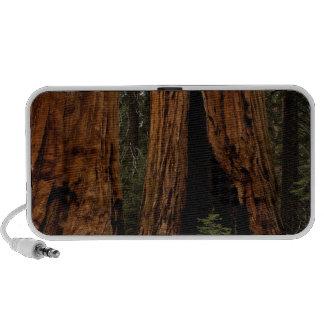 Redwood Trees, Sequoia National Park. Portable Speaker