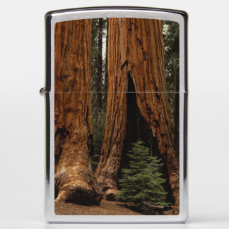 Redwood Trees, Sequoia National Park. Zippo Lighter