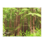 Redwood Trees Stretched Canvas Print