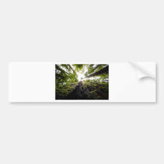 Redwood Trees with Mossy Trunk Bumper Sticker