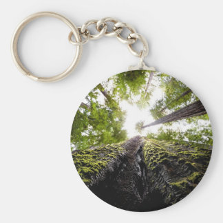 Redwood Trees with Mossy Trunk Key Chains