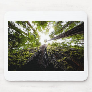 Redwood Trees with Mossy Trunk Mouse Pad