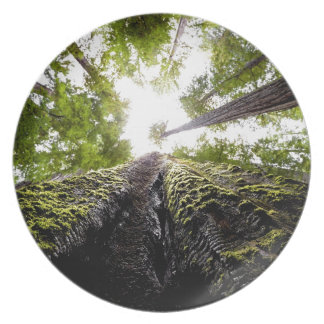 Redwood Trees with Mossy Trunk Dinner Plates