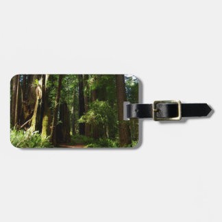 Redwoods and Ferns at Redwood National Park Bag Tag