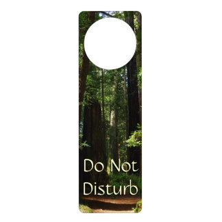 Redwoods and Ferns at Redwood National Park Door Hanger