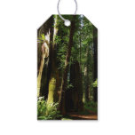 Redwoods and Ferns at Redwood National Park Gift Tags