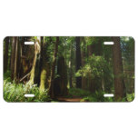 Redwoods and Ferns at Redwood National Park License Plate