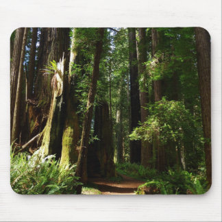 Redwoods and Ferns at Redwood National Park Mouse Pad