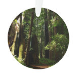 Redwoods and Ferns at Redwood National Park Ornament